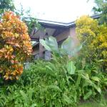 Lush vegetation outside our bungalow