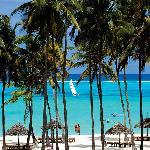 Diamonds Dream of Zanzibar
