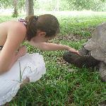 Meine Begegnung mit einer Riesenschildkröte