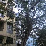 Foto de Hotel Ameya