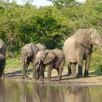 Kapama Reserve Safari