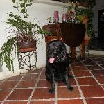 la padrona di casa: UMA