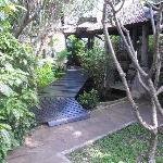 Jungle Pathway to Villas