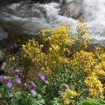 Wildflowers on the Creek