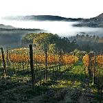 La vigna del Vino Nobile