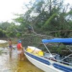 Expect the unexpected- Fallen tree blocking our boat!