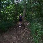 Forest near entrance