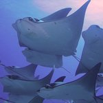School of Rays at Lands End