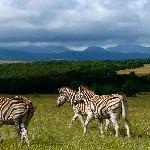 Gondwana Game Reserve Foto