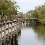 A bridge along the mangroves at Robinson Preserve