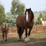 The beautfull horses
