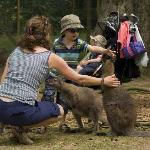Wander with the Wallabies