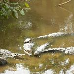 Playa Linda -- Crocs with Turtles