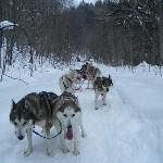 Peace Pups Dog Sledding!
