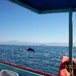 whalewatching from our boat