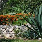 Belize Botanic Gardens