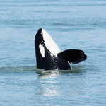 Steveston Seabreeze Adventures & Whale Watching