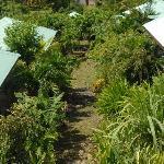 Les 4 gîtes cloturés par végétation