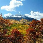Colorado's Largest Aspen Grove, GCBTA Photo