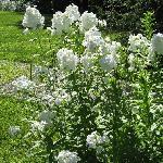 Beautiful flowerws