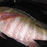 pesce fresco assicurato ogni giorno