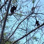 le scimmiette sugli alberi