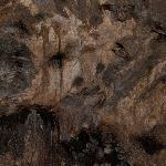 Oilbirds in Cumaca Cave