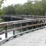 There are many scenic bridges at Robinson Preserve