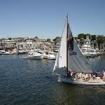 Scenic sailboat rides on the harbor
