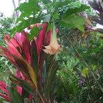 Princeville Botanical Gardens - Tours