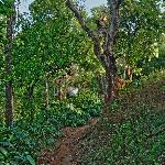 estate trails