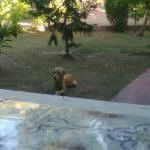 stray dog who stays with us whole three days