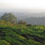View fom Munnar