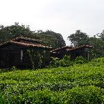 Photo of Nyungwe Forest Lodge