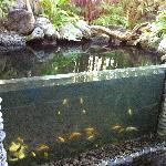 the fish in our rain forest area