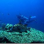 Spectacular Wakatobi Diving