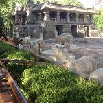 Feeding llamas via a chute