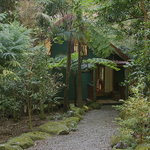 Private cabins nestled in the rainforest