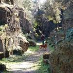 Foto de Borgo di Ceri B&B
