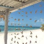 Tenda di coralli