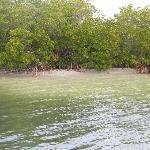 Mangrooves on the sound side (east side) of the island