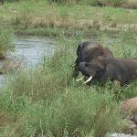 Elephants down by the river - 400m from Khaya Umdani