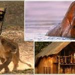 Safaris South Luangwa