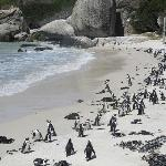 Lots of penguins on the beach