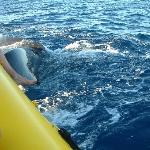 close to the raft