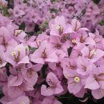 The beautiful flower gardens