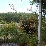 Gardens at big Brooke