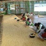 In the workshop of Prek Toal (Tonle Sap)