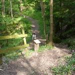 Extensive Woodland Walks