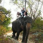 Treck à dos d'éléphant